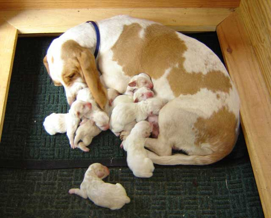 With mom and brothers and sisters - 1 week old - October 8, 2006